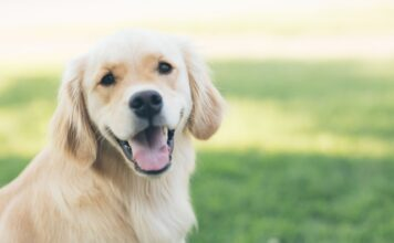 How long is a dog pregnant?